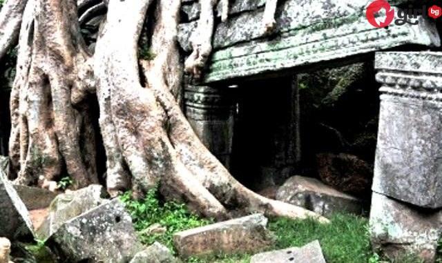 Врата насред дърветата