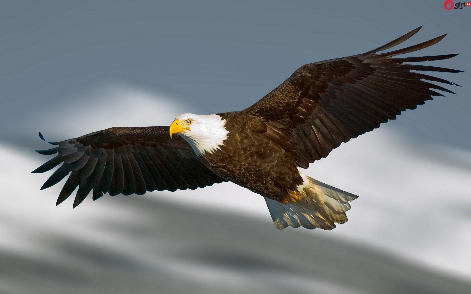света през погледа на орела