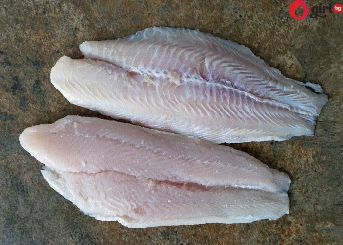 риба пангасиус