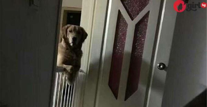 куче наблюдава собствениците си