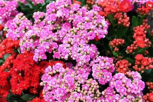 тайната на красивите цветя