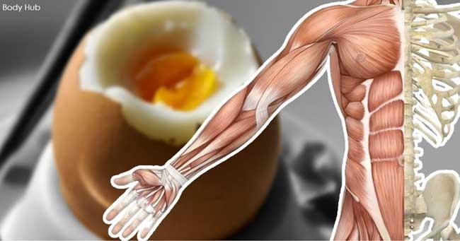 13 чудесни неща, които ще се случат с тялото ви, ако ядете яйца всеки ден